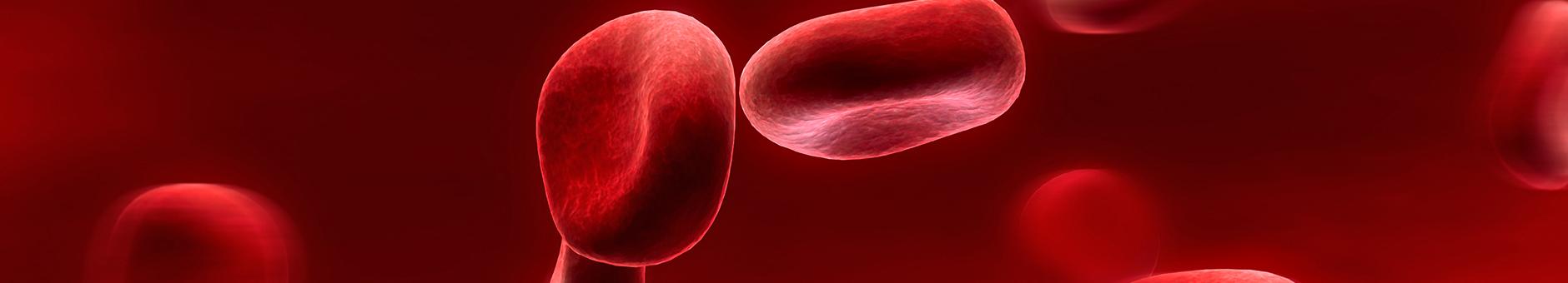 Hematologia - medex chrzanów